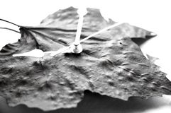 Leaf and time. Conceptual photo of leaf as time, in black and white Royalty Free Stock Image