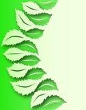 Leaf to leaf Royalty Free Stock Photo