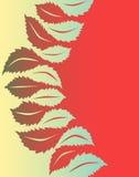 Leaf to leaf Royalty Free Stock Images