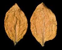 Leaf tobacco Stock Photo