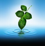 Leaf Touching Water Stock Photography