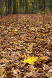 Leaf Trail In Forest Royalty Free Stock Photos