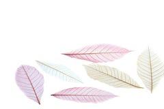 Leaf transparent. Art leaf transparent on white background royalty free stock images