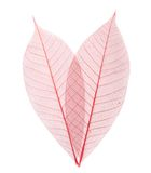 Leaf transparent background. Stock Images