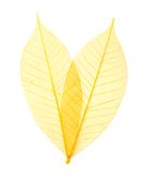 Leaf transparent background. Royalty Free Stock Image