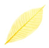 Leaf transparent background. Stock Photos