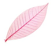 Leaf transparent background. Royalty Free Stock Photos