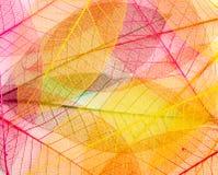 Leaf transparent background. Royalty Free Stock Image