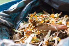 Leaf Trash. A bunch of leaves in a trash for recycle Stock Photos