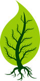 Leaf tree Stock Images