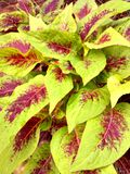 Leaves. Colors by natural created beautiful nature Stock Photo