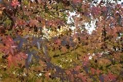 Leaf, Tree, Autumn, Deciduous