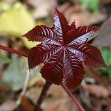 The leaf of the tree of burgundy color. With a gloss. Close-up stock photos