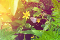 Leaf tree and Butterfly on yellow flowers nature Royalty Free Stock Photography