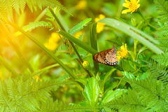 Leaf tree and Butterfly on yellow flowers nature background Royalty Free Stock Image