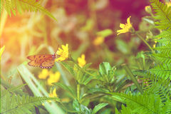 Leaf tree and Butterfly on yellow flowers nature Royalty Free Stock Images