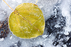 Leaf of a tree in the ice Stock Photography