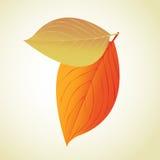 Leaf tree illustration Stock Photos