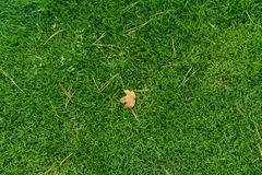 Leaf from tree laying on green meadow grass Stock Image