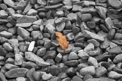 A leaf of a tree lies on the stones Stock Photography