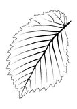 Leaf tree outline. List elm. Black and white picture Stock Photography