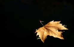 Leaf tree over the lake. With black background Royalty Free Stock Photos