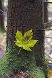 Leaf, Tree, Plant, Flora