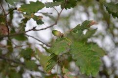 Leaf, Tree, Plant, Flora royalty free stock photos