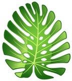 Leaf tropical plant - Monstera. Glossy illustration Stock Illustration
