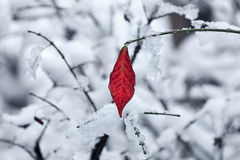 Leaf on the twig covered with snow. Royalty Free Stock Photography