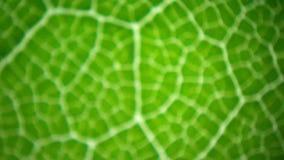 Leaf under microscope stock video