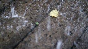 Leaf Under The Rain Closeup stock video footage