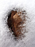 Leaf under snow Stock Images