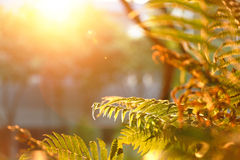Leaf under sun ray. A leaf with sun ray Stock Photos