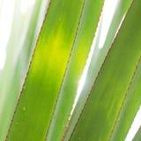Leaf under sunlight Stock Photography