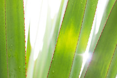 Leaf under sunlight Royalty Free Stock Photography
