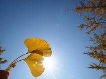Leaf under sunshine&sky royalty free stock photos