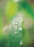 Leaf under Waterdrop Royalty Free Stock Photography