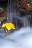 Leaf under waterfall stock photo