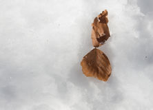 Leaf in an unusual environment and contrast. Brown Leaf in an unusual environment and contrast Royalty Free Stock Photography