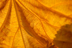 Leaf V. Leaf - ideal as background Royalty Free Stock Photography