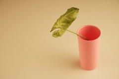 Leaf in vase Royalty Free Stock Photo