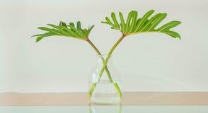 Leaf in vase. Decoration in home stock images