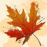 Leaf vector Stock Photos