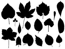 Leaf vector Royalty Free Stock Images