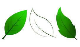 Leaf vector with green colour and transparent color stock photography
