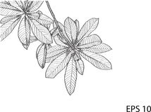 Free Leaf Vector Line Sketch Up Royalty Free Stock Photos - 100053408