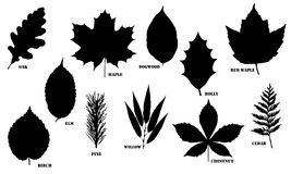 Leaf Vector Silhouettes Royalty Free Stock Image