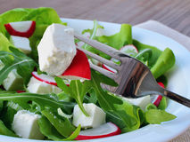 Leaf vegetable salad with feta cheese closeup Royalty Free Stock Photography