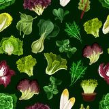 Leaf vegetable, salad greens seamless pattern Royalty Free Stock Photography